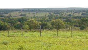 Fazenda Periquitos - Tres Lagoas, MS